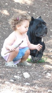 cane corso et enfant