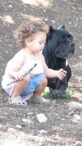 cane corso et enfant
